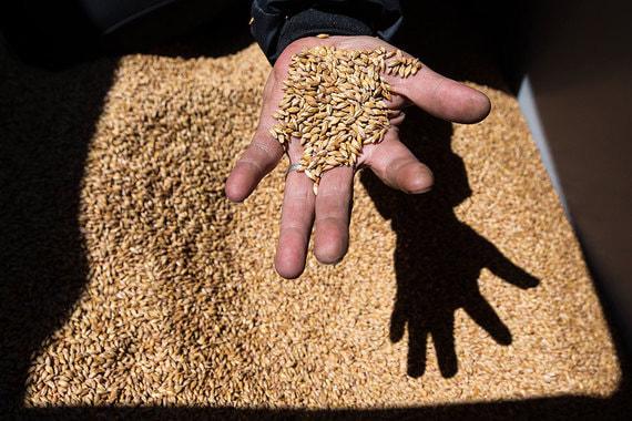 Понижены прогнозы на урожай зерна в России