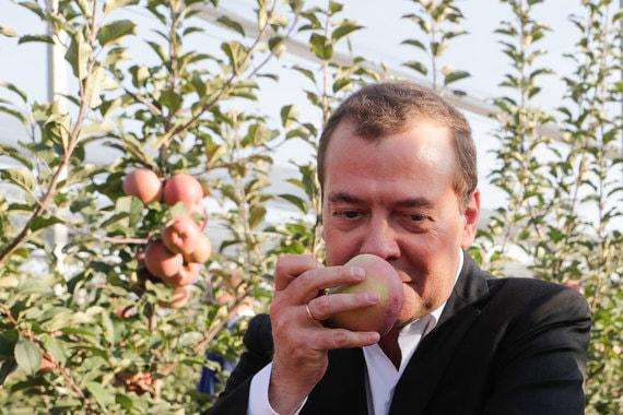 Путин, Медведев и ставропольская пыль в яблоневом саду