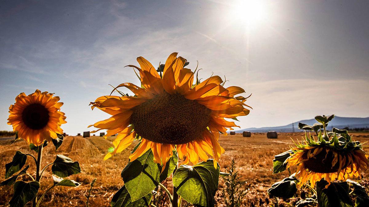 Экстенсивное развитие сельского хозяйства – одна из причин, хотя и не главных, изменения климата