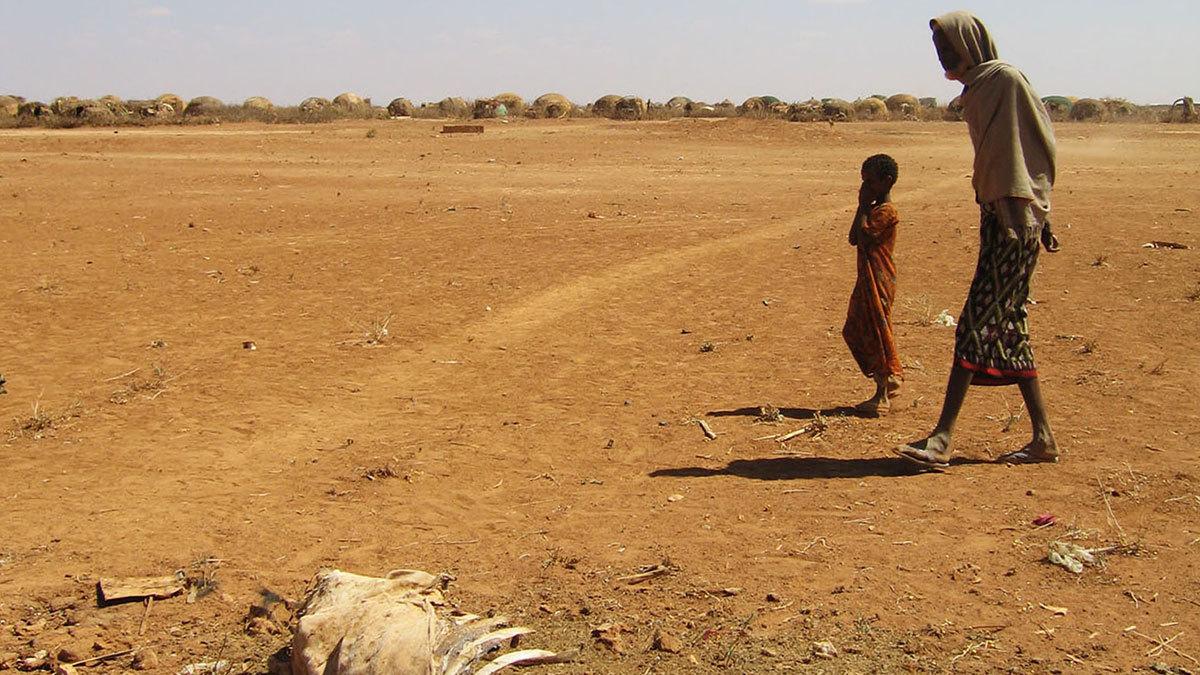 ООН предупреждает, что недостаток продовольствия и воды будет причиной массового переселения людей
