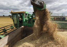 Вводя экспортные пошлины, правительство надеется снизить  внутренние цены на зерно