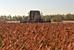 Гречка - «сибирский» продукт                                      Крупнейшим производителем является Алтайский край (43,8% всего урожая). Далее со значительным отрывом идут Орловская область (8,2%), Оренбургская область (7,1%) и Башкирия (6%)