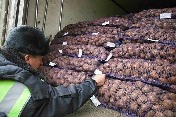 После введения санкций белорусам приходится упаковывать картофель в мешки и снабжать их этикетками. Овощи без маркировки Россельхознадзор сейчас в Россию не пропускает.