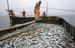 """Женщинам в России не запрещено рыбачить, ограничения действуют только на прибрежный лов """"на ручной тяге закидных неводов, подледный лов рыбы на закидных неводах, ставных сетях и вентерях"""""""