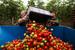 Польша                                          В Россию в 2013 г. поступило овощей и корнеплодов из Польши на $250 млн, фруктов - на $497 млн.