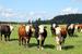 Финляндия                                          Финляндия - один из основных поставщиков молочной продукции в Россию. По данным Федеральной таможенной службы за 2013 г., из Финляндии в Россию было ввезено молочной продукции, яиц и продуктов животного происхождения на $318 млн. Местная компания Valio уже заявила, что прекратила работу на экспорт в Россию, хотя заводы внутри страны останавливать не собирается.