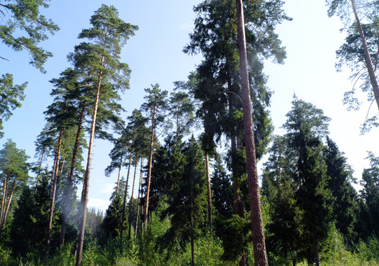 Кто и как приватизирует лес на Рублевке