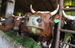 Мясо из Молдавии                                          Поставки мяса из Молдавии запрещены с 27 октября. Россельхознадзор в ходе совместной с белорусскими коллегами инспекцией обнаружил небезопасные партии мяса, которые поступали в Россию через Белоруссию.