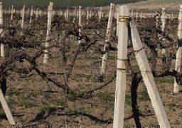 10 лет назад у «Мысхако» было почти 900 га виноградников