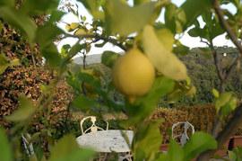 Большинство столиков в Cazanova находятся в саду, среди сосен и лимонных деревьев