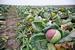 Земли «БТА банка» под Подольском остались                    сельскохозяйственными
