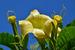 Май 2012 г. Некоторые биологически активные добавки к пище                                                              Запрещены производство и продажа биологически активных добавок к пище, содержащих части ряда растений: бругмансии, брунфелзии крупноцветковой, ипомеи, мимозы прерий, мимозы хостилис.                               Основанием для запрета стала способность содержащихся в этих растениях веществ оказывать психотропное воздействие