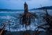 Даниэль Берехулак, Австралия, Getty Images                                          Япония после волны                     7 Марта 2012, Рикудзентаката, Япония                     Сосны, вырванные с корнем во время цунами, разбросаны по пляжу. Cпустя год после землетрясения и вызванного им цунами, которые в марте 2011 года превратили в зону бедствия обширные территории северо-восточного побережья Японии, тысячи людей все еще оставались без жилья, а японскому правительству приходилось вести серьезную работу для ликвидации последствий и восстановления нормальной жизнедеятельности в пострадавших районах. Город Рикудзентаката в префектуре Иватэ был практически полностью разрушен цунами, погибли почти 40 % жителей – до стихийного бедствия здесь проживало более 23 000 человек.