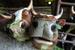 """Молочная ферма """"Рождество"""". Владимирская область, июль 2012 г."""