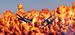 """27 февраля 2013 г.                                          В пригороде Мельбурна проходит международный авиасалон """"Авалон-2013""""."""