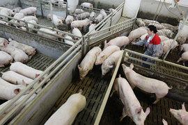 Прошлый год стал удачным для российских животноводов