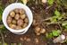 Оптовые цены на картофель выросли на 36,3%