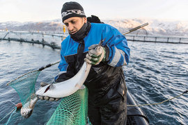 «Русскую аквакультуру» подвел слабый рубль