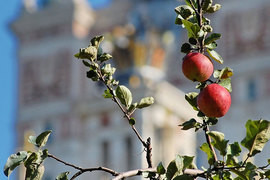 МГУ признан пятым в списке лучших европейских вузов по оценке Thomson Reuters