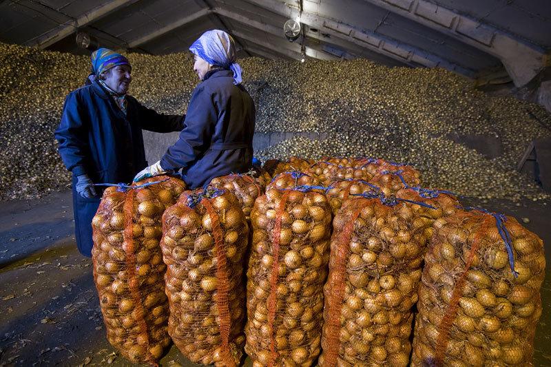 ЦБ предложил строить овощехранилища на пенсионные деньги