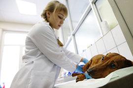 Самые бесперспективные специальности, которым обучают в московских вузах, — ветеринар и зоотехнолог