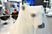Белый медведь «Роснефти», которая является генеральным партнером форума, размещен в зоне делового общения в «Ленэкспо». «Роснефть» взяла под опеку всех белых медведей, которые содержатся в зоопарках России, и недавно запустила программу «Жизнь белых медведей в прямом эфире»