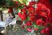 Основная тема Moscow Flower Show – 2015 – «Поэзия садов»