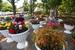 За время фестиваля зрителям покажут более 30 000 цветов и растений