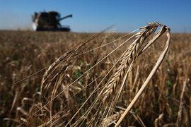 От засухи в основном пострадали Саратовская, Самарская и Оренбургская области, Татарстан и Башкирия