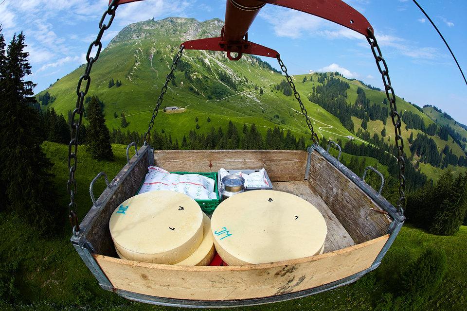 Ввозить сыр нельзя, а продавать его же можно, рассудил арбитраж