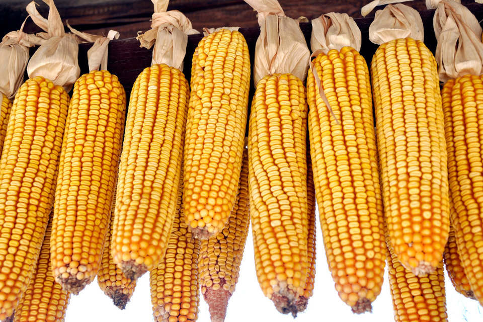 Украина и Китай в 2012 г. подписали меморандум, подразумевающий ежегодную поставку 2–2,5 млн т кукурузы в обмен на выданный Китаем заем в $3 млрд