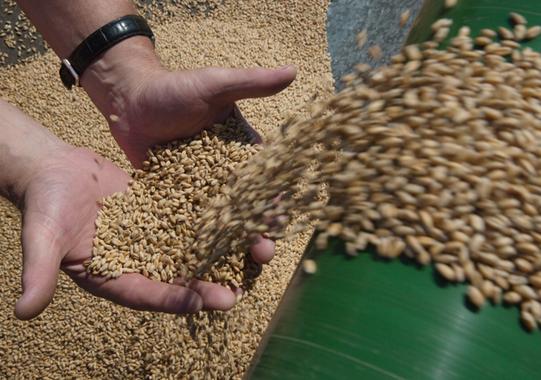 Выкуп зерна из интервенционного фонда в 2015 г. начался на полгода позже