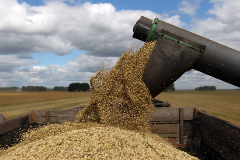 В 2015 календарном году «Риф» рассчитывает вывезти из России 3 млн т зерна