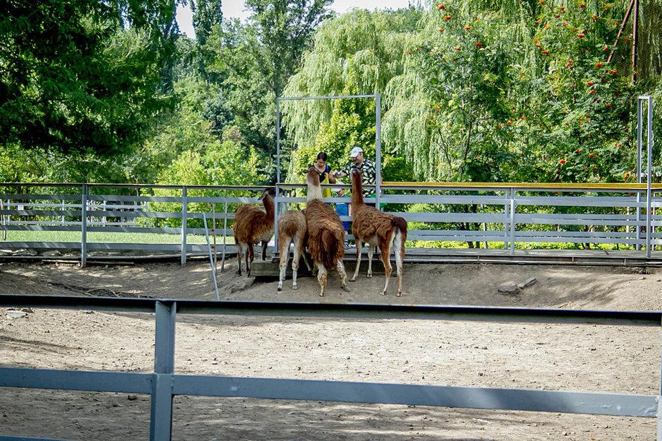 Ростовский зоопарк хотят сделать ландшафтным
