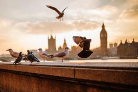 Хедж-фонды перебираются в Лондон