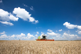 ФАС разрешила «Агрокомплексу» купить три хозяйства в Краснодарском крае