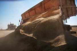 Ослабление рубля  привело в действие экспортную пошлину на пшеницу
