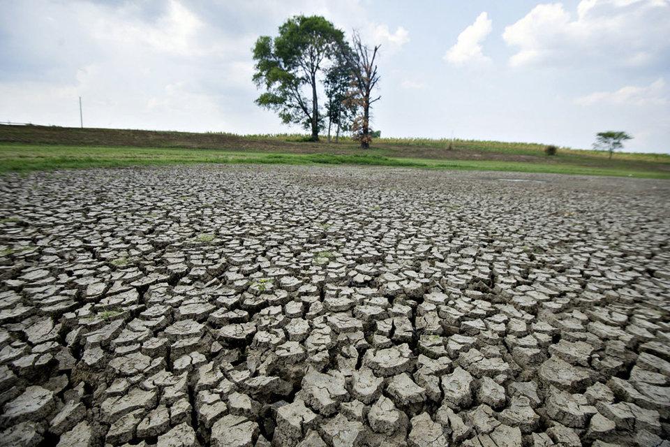 По данным министерства, предварительный ущерб, нанесенный сельхозпроизводителям, составил около 7,6 млрд руб.