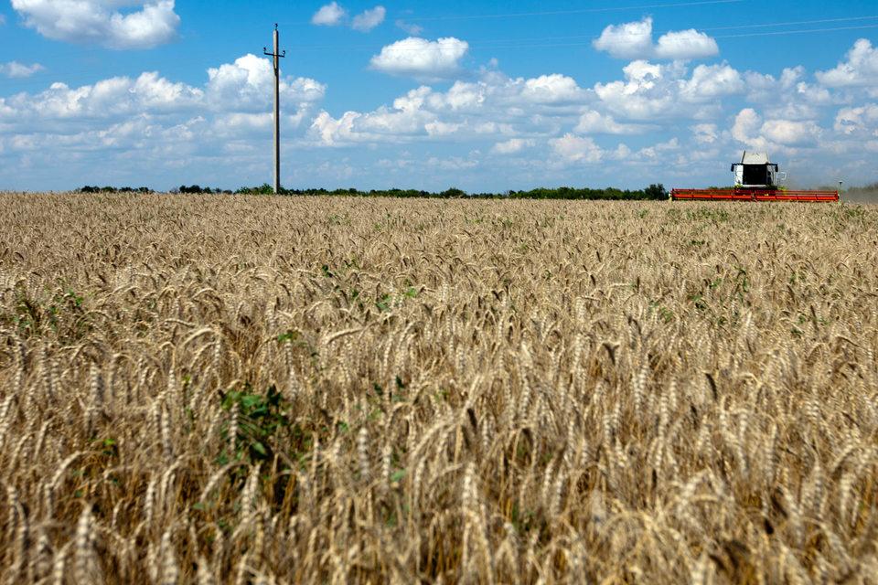 Угодья в Ростовской области достались его кредитору – Россельхозбанку