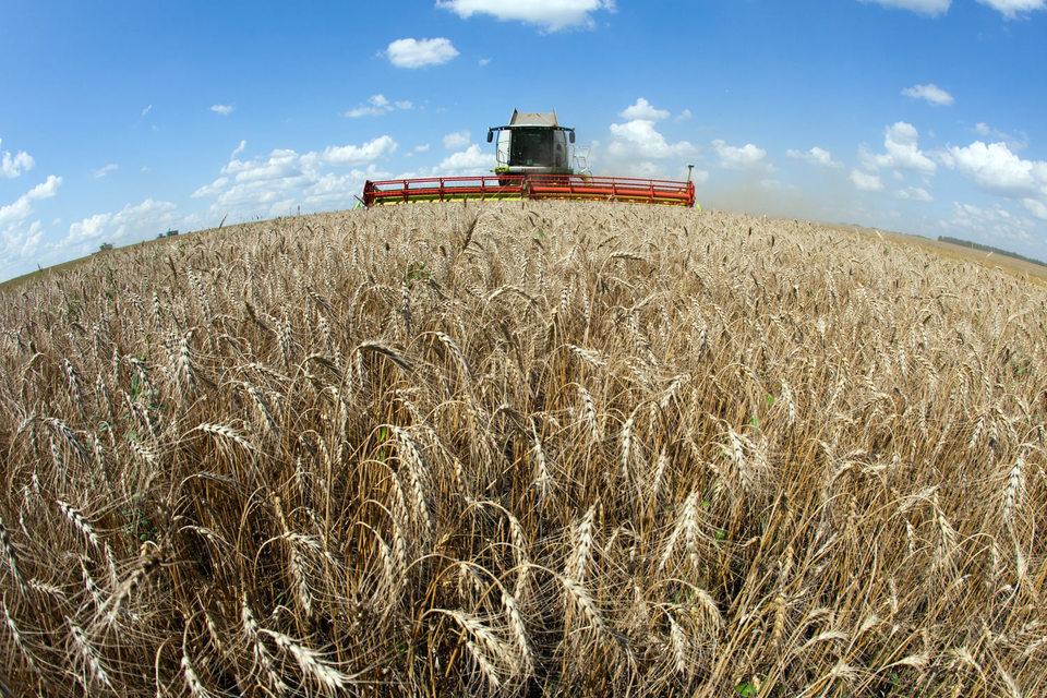 В прошлом году «Урожайное» преимущественно сдавало землю в аренду