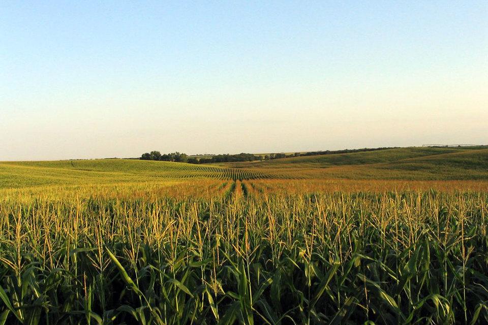 По оценкам министерства сельского хозяйства США, в 2015 г. чистая совокупная прибыль фермеров в стране сократится на 32% до $74 млрд, минимального уровня с 2009 г.