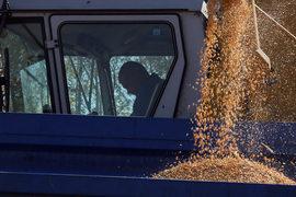 Пока рыночная цена на зерно аграриев устраивает