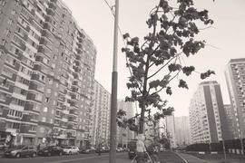 «Программа 200» – яркий случай более общей проблемы московских зеленых зон