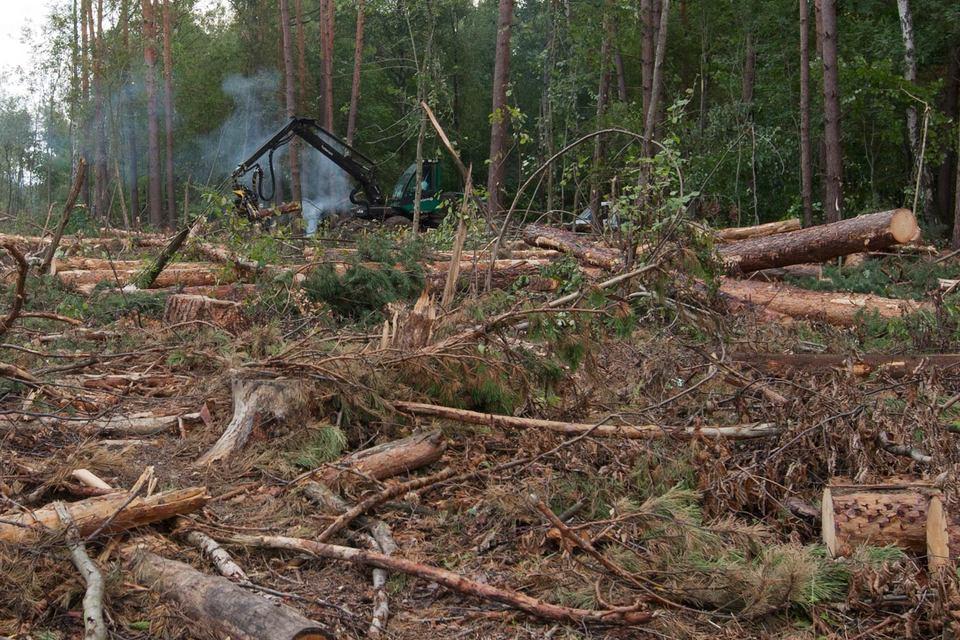 Одна из причин убытков – конфликт вокруг Химкинского леса, отмечает консультант «Автодора»