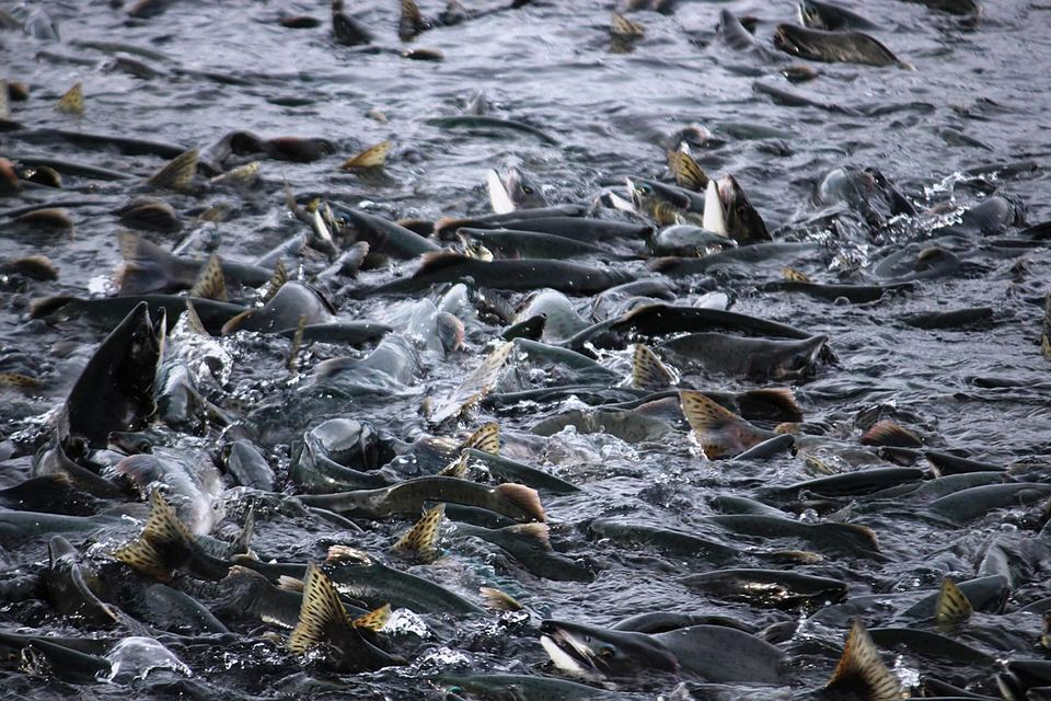"""Убыток произошел за счет роста процентных расходов, а также гибели рыбы """"в виду форс-мажорных обстоятельств"""", говорится в отчетности"""