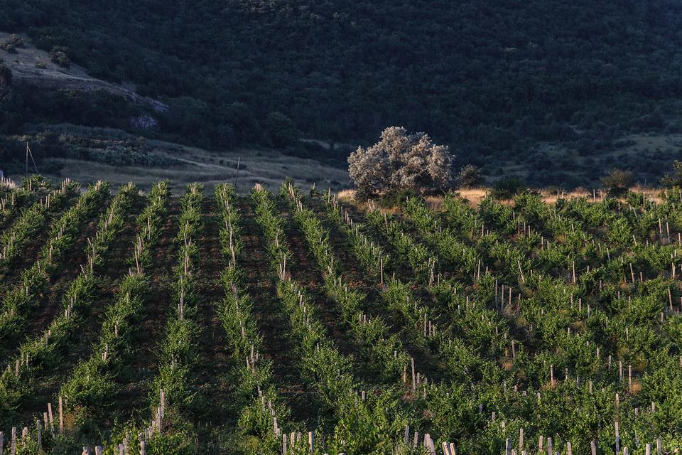 С недавних пор виноградари также могут претендовать на оплату государством части стоимости кредитов