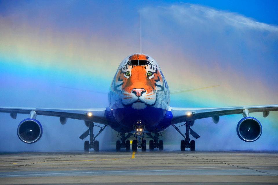 """Самолет Boeing 747 компании """"Трансаэро"""", носовая часть которого украшена изображением головы амурского тигра"""
