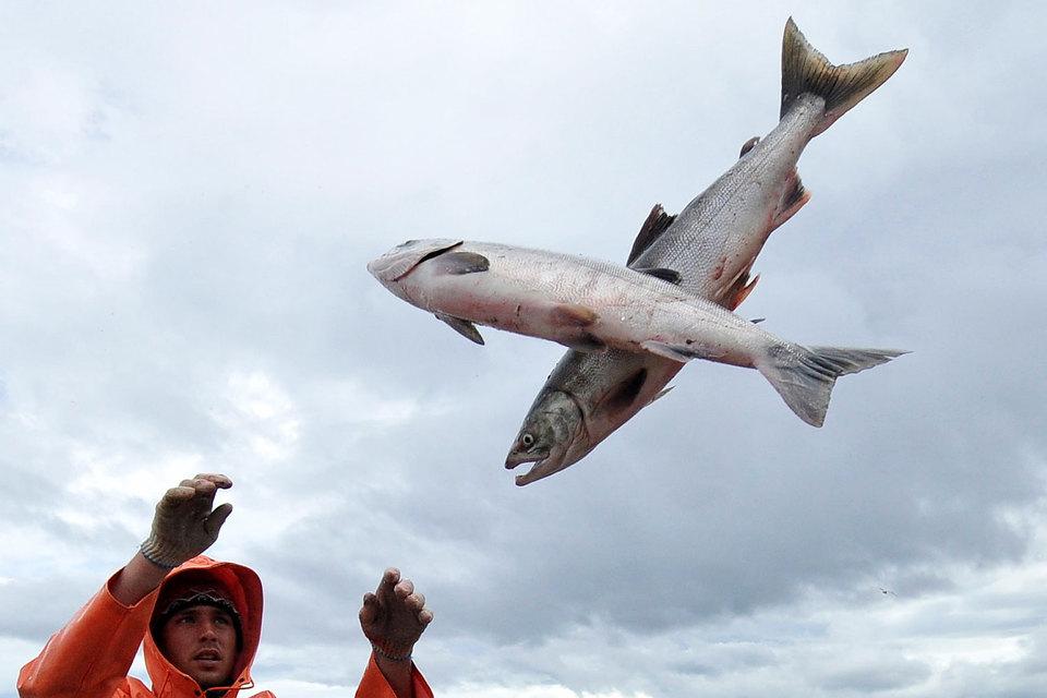 Проектная мощность ферм «Русского лосося» – 30 000 т в год, 95–99% компания продает материнской группе, говорится в ее отчете
