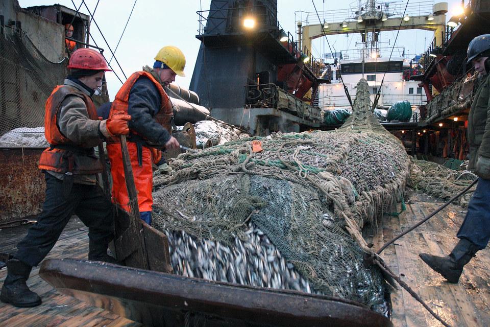 Участие иностранного капитала в рыбопромысловых компаниях возможно только по согласованию с правительственной комиссией по иностранным инвестициям