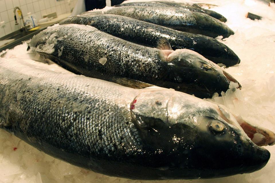 Несколько лет назад более половины всей рыбы, продававшейся в России, импортировалось